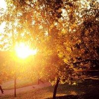 золотая осень :: Таня