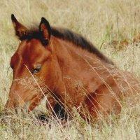 Жеребенок в осенней траве :: Анна