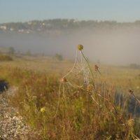 Утро было туманное и морозное. :: Анатолий Пашковский