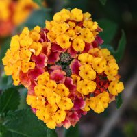 Разноцветный цветок :: Александр Яковлев