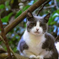 Уютный кот :: cfysx