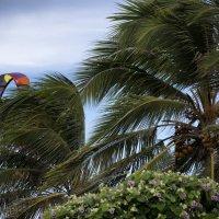 Ветер :: Алина Ванага