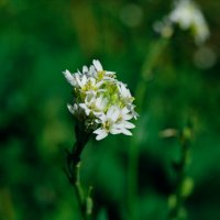 лесные травы :: Света Кондрашова