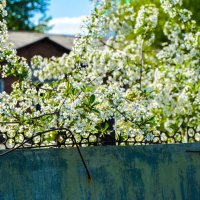 это была весна, но она уже давно позади :: Света Кондрашова