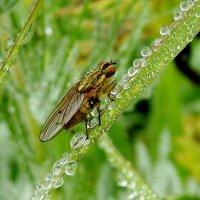 осенняя муха :: Анна