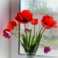 Воспоминание весны :: Марина Романова