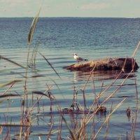 Чайка на отдыхе....)) :: Катерина Чичина