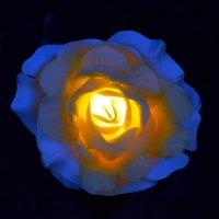 Роза садовая, пластиковая... :: gegMapuXyaH