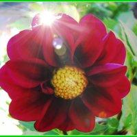 цветы осени :: Надежда