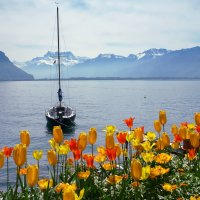 тюльпановое настроение :: Elena Wymann