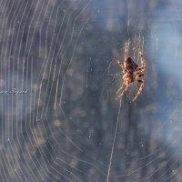 spider :: Sergey Bagach