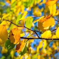 Желтое на синем. :: Vladimir Lazarev