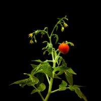 «Урожай» :) :: Андрей Окороков