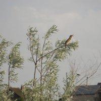 неизвестная птица :: Анастасия сосновская