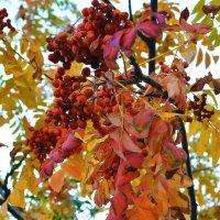 Кучерявая, рыжая осень :: 4uika (Алла) Тарасова