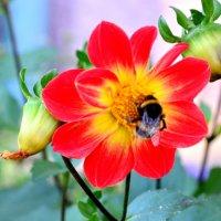 Пчелка и цветок :: Марина Романова