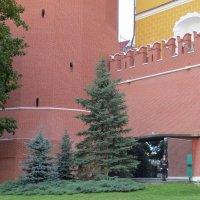 У Кремлёвской стены :: Вера Щукина