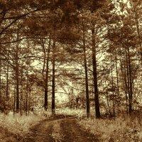 сумеречный лес :: Анна -