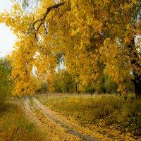 Оделись в жёлтое деревья и дороги… :: Алексей (АСкет) Степанов