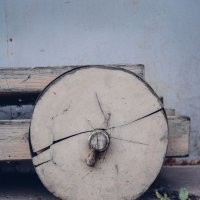 колесо :: Света Кондрашова