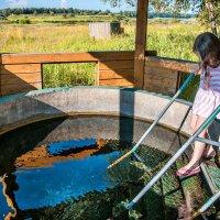 Реки, ключи, купель - воде доверься! :: Ирина Данилова