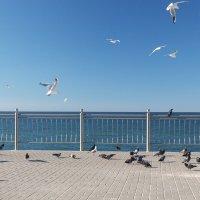 Птицы... :: Александр Манько