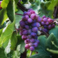 Урожай2016. :: александр мак mak