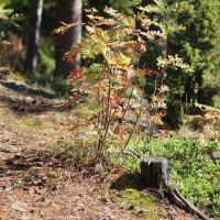 прогулка в лесу :: Надежда Щупленкова