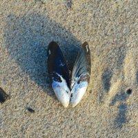 Ракушка на песке. :: Марина Никулина
