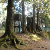 В горах Тайваня :: Виталий  Селиванов
