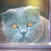 За окном :: Виталий  Селиванов