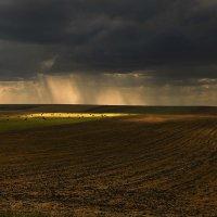 В полях, под зноем и дождём :: Сергей Жуков