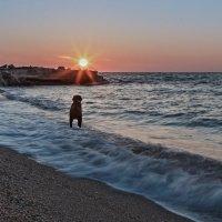 Встречающий рассвет :: Андрей Медведев