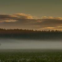 Утренний туман :: Николай Климович
