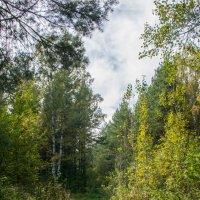 дорога в лес :: Юрий Борзов