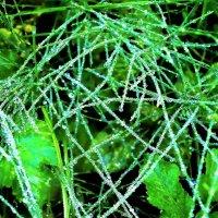 Алмазы на траве :: Валерий Розенталь