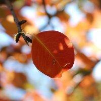 Краски осенних листьев просто неповторимы :: Аl Anis