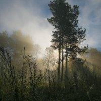утро в лесу :: Константин