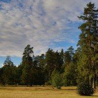 У леса,на опушке... :: Карпухин Сергей