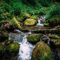 Природа :: Роман Жданов