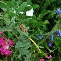 Полевые цветы :: Нина Корешкова