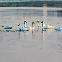на соленом озере :: Natali Kosheleva
