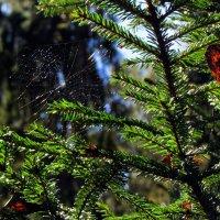 Осенние паутинки... :: Ирина Румянцева