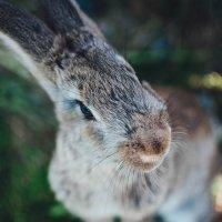 bunny :: SteelRabbit Mustache