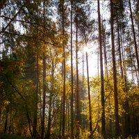 Осень - я давно с тобою не был... :: Олег Карташов