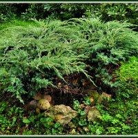 В нашем старом саду :: Михаил Малец