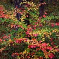 Осень :: Альбина