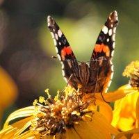 Бабочка :: Ирина ...