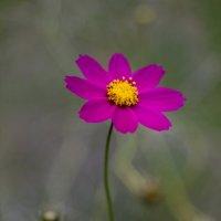 Осень, цветок... :: Татьяна Петрова