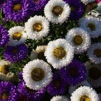 Про цветы сверху :: Сергей Анисимов